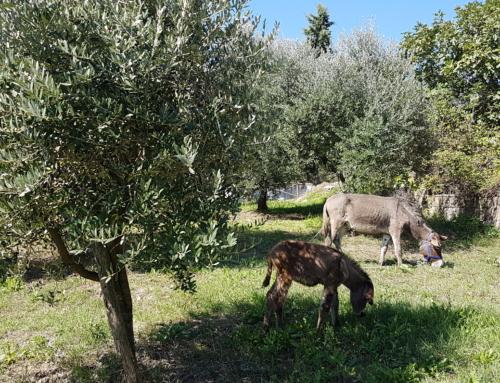 Il Primo maggio pranza in fattoria